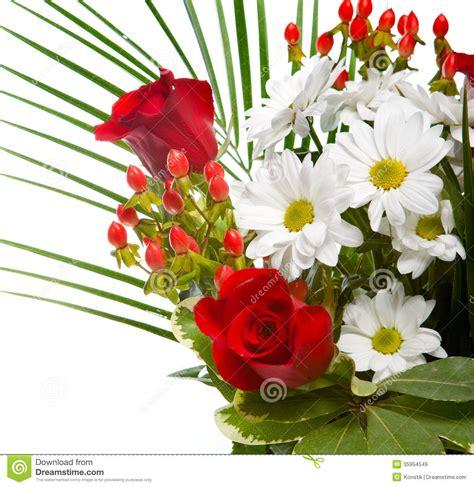 imagenes rosas hermosas brillantes las flores rojas y blancas brillantes y hermosas se