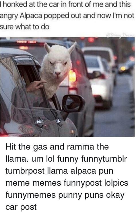 honked   car  front     angry alpaca