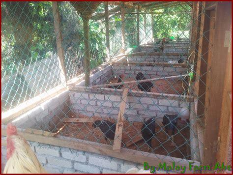 Pagar Kandang Ayam Bangkok cara membuat kandang indukan untuk beternak ayam bangkok