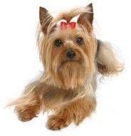how to make yorkie hair bows 17 best images about bows diy on hair bows for dogs and metals