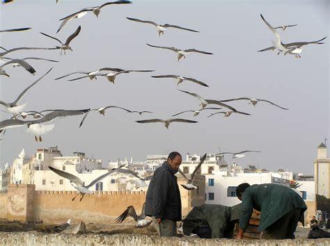 citta e porto marocco porto di essaouira viaggi vacanze e turismo turisti