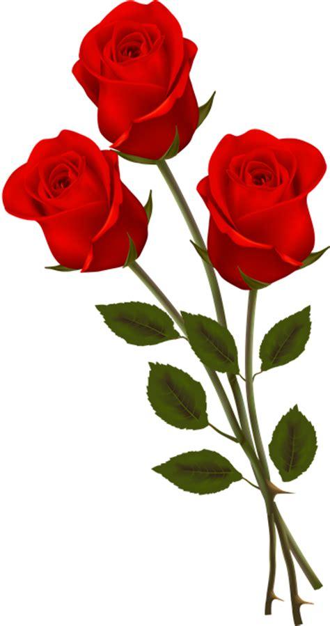 imagenes de flores individuales 174 gifs y fondos paz enla tormenta 174 im 193 genes de rosas