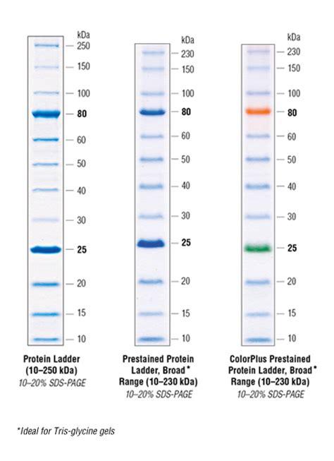 protein ladder high protein high molecular weight protein ladder