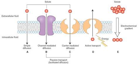 electrophysiology  neurons  neuron part