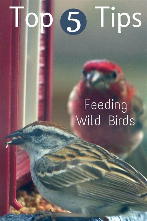 top 5 tips for feeding wild birds gardening know how s blog