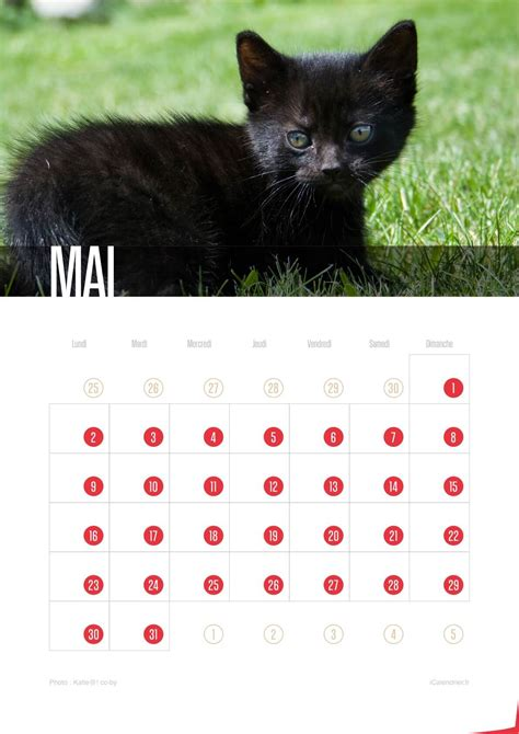 Calendrier De Chat Calendriers Chats De Chatons 2016 Icalendrier