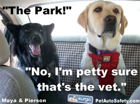 Dog Vet Meme - almost wordless wednesday memes american dog blog
