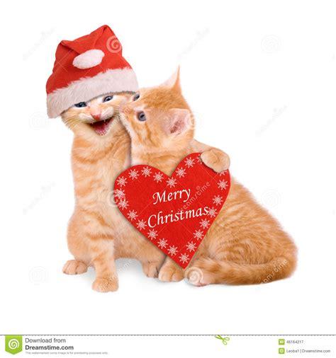 cats  santa hat wishing merry christmas isolated stock photo image