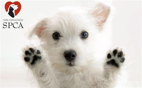 sf spca homeless dog fun paw care