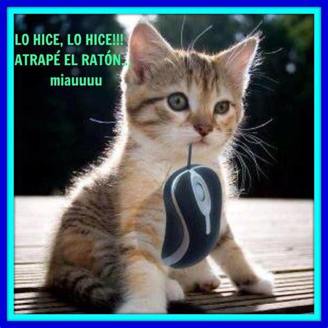 imagenes tiernas graciosas ver imagenes tiernas de gatitos con frases singulares