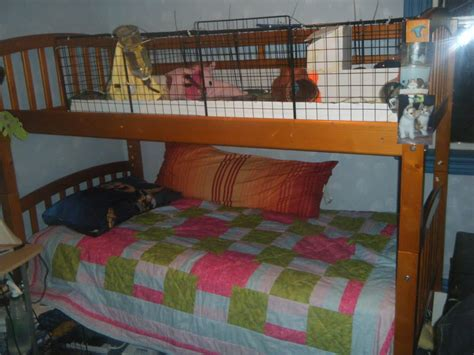newspaper bedding what do you keep your c c cage on the guinea pig forum