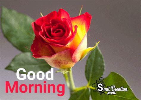 Imagenes Gif Good Morning | good morning gif image pictures and graphics