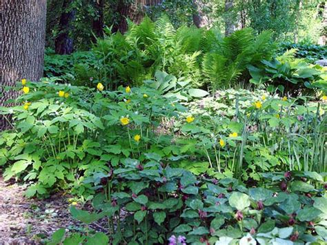 shade flower garden 19 best images about shade gardens on shade