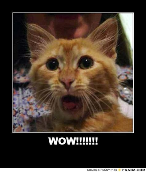 Shocked Cat Meme - surprised cat meme generator image memes at relatably com