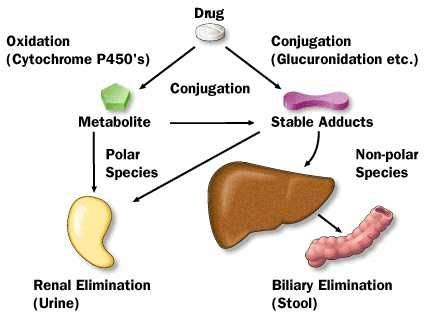 17 best images about how to lower liver enzymes on