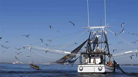 sea fox boats san diego county seeks ways to support local fishing industry