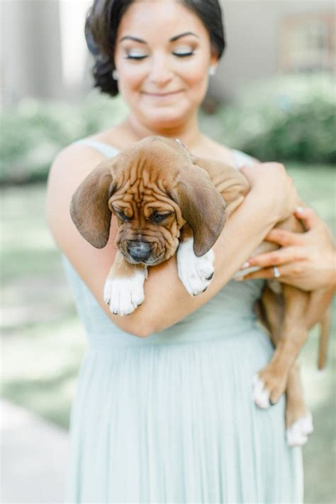 bridesmaids puppies bridesmaids carry rescue puppies instead of flowers top13