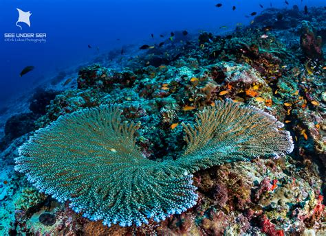 dive travel andaman islands dive travel guide bluewater dive travel