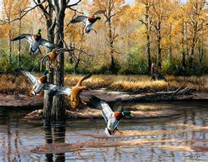 duck hunting wall murals ducks murals murals your way