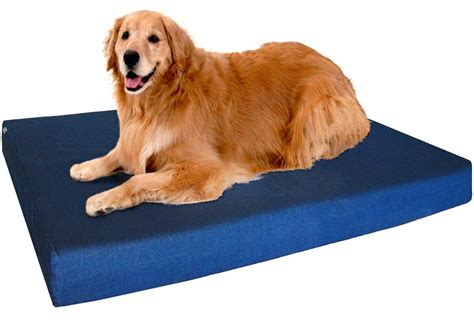 extra large orthopedic dog bed best orthopedic dog beds large dogs korrectkritterscom