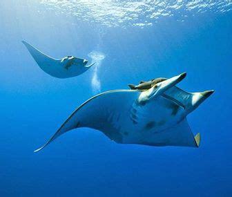 imagenes de animales que viven en el mar 191 cuantas especies de animales viven en el mar queanimal