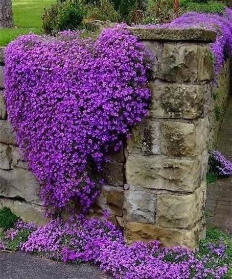 heart shaped purple flowers pictures, photos, and images