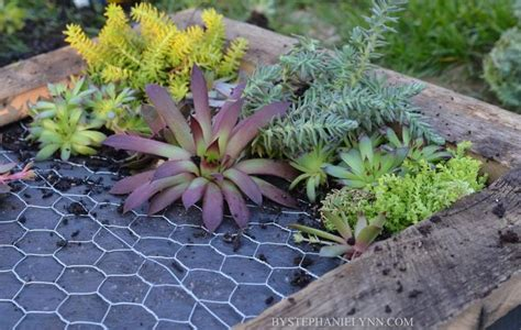 Succulent Wall Planter How To Make A Succulent Wall Garden