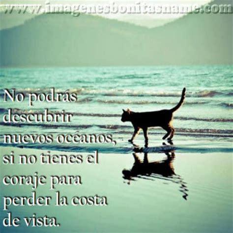 imagenes con frases de amor en la playa gato paseando en la playa imagenes bonitas frases bonitas