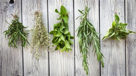 hanging herbs tip when to use fresh versus dried herbs