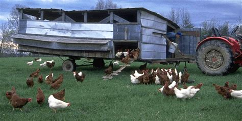 how chicken tractors can increase egg production and get pastured poultry resources