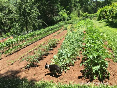 southern vegetable garden that beautiful vegetable garden southern hospitality