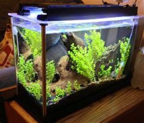 Fluval Spec Aquascape by Fluval Spec V With Hydrocotyle Sibthorpioides My Own