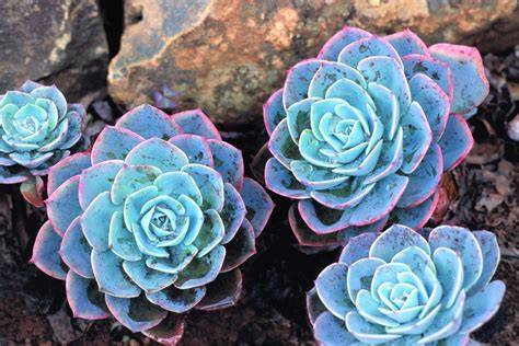 start a desert garden with succulent daily easy inspiration for backyard project holicoffee