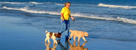 myrtle puppies myrtle pet friendly hotels resorts vrbo and services