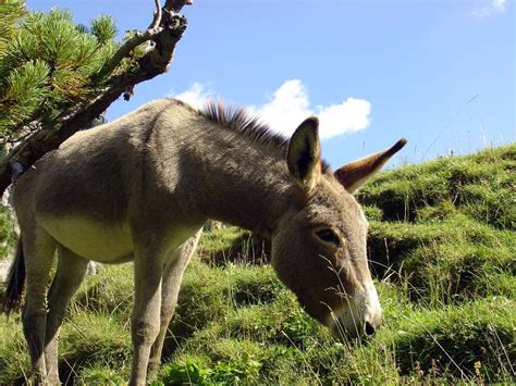 Burro Animal by Wallpapers Animals Wiki Pictures