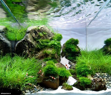 aquascaping tall tanks 36 best aquascaping tall tanks images on pinterest
