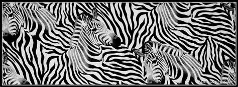 simple zebra pattern zebra pattern facebook covers zebra pattern fb covers