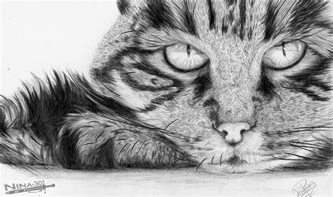 imagenes blanco y negro gatitos gato a lapiz by nina 30 on deviantart