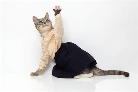 cat fashion designer cat clothing trends tribulations