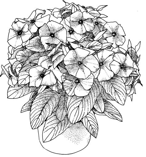 flower coloring pages for adults flowers coloring pictures for adults flowers