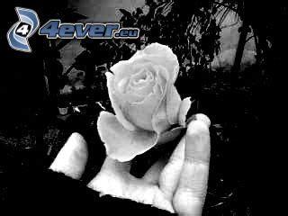 imagenes de tristeza rosas rose