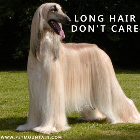 Long Hair Dont Care Meme - long hair don t care pet humor pinterest