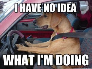 Dog Driving Meme - wtf wednesday cars gifts and pee up humming a