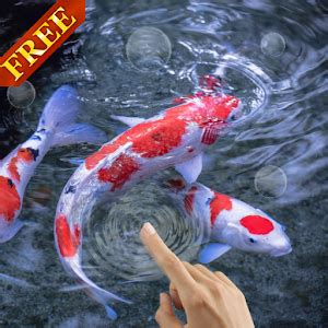 full version of koi live wallpaper download koi fish 3d live wallpaper google play softwares
