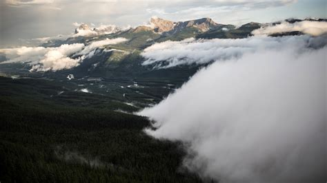 bitcoin fog tutorial wall of fog over the forest at banff national park