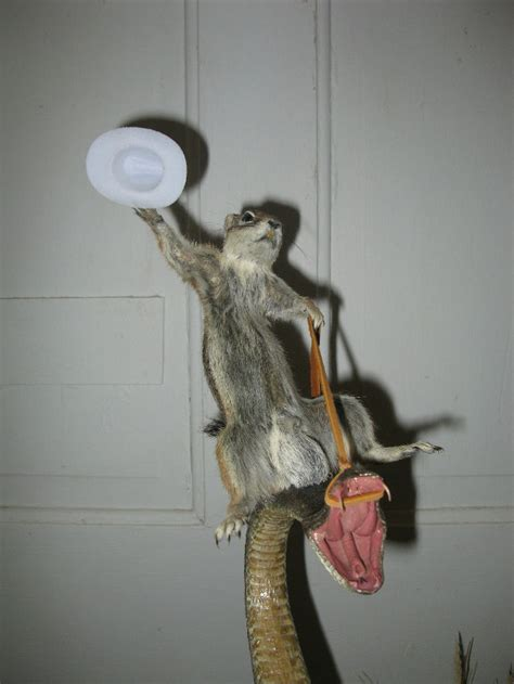 classic taxidermied rodeo squirrel riding rattlesnake