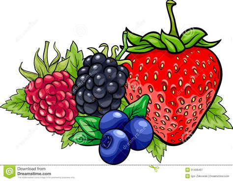 berry design berry fruits illustration stock vector image 31406497