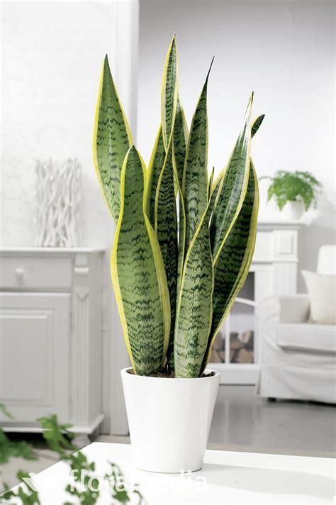 decora  refresca tu hogar  estas plantas purificadoras