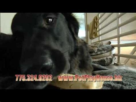 daycare reno nv pet play house commercial day care reno nv