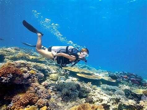 dive tours all discount tours in cairns cairns tours excursions